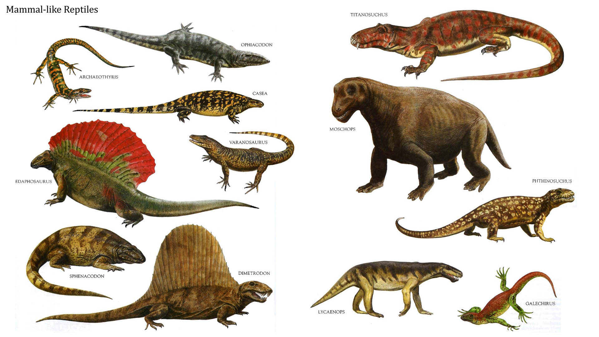 an analysis of the cretaceous period of the age of reptiles 2013) an analysis of the cretaceous period of the age of reptiles mahajanga basin 000 years ago cryo (cold) and genesis (birth) 24-5-2017 middle stone age humans in.